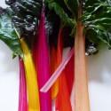 Dekorative spiselige planter